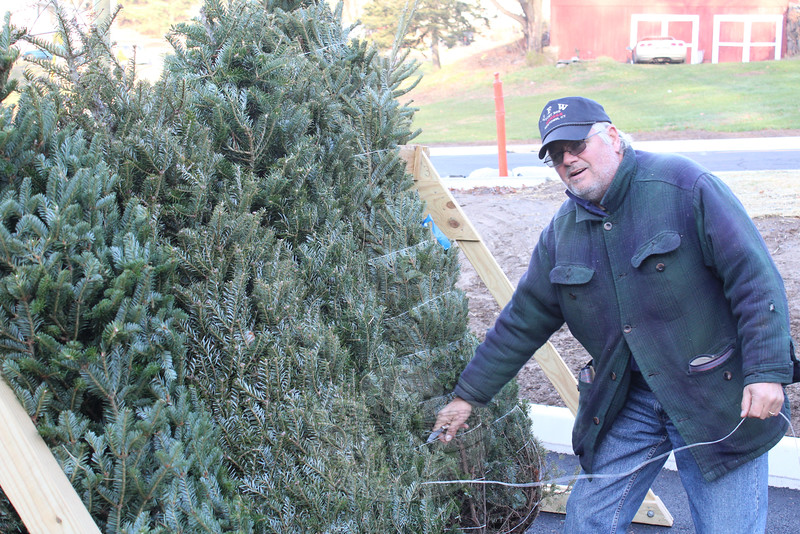 Ray Wisniewski cut bundling twine from some of the first trees that were put on stands in front of the Sandy Hook main station, 18-20 Riverside Road. Trees, and other holiday decorations, are being sold daily until Christmas Eve, or while supplies last. (Hicks photo)