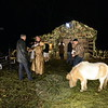 A miniature horse grazes on the lawn where a living nativity welcomes guests after a mass Saturday, December 12, at St Rose of Lima Church. (Bobowick photo)