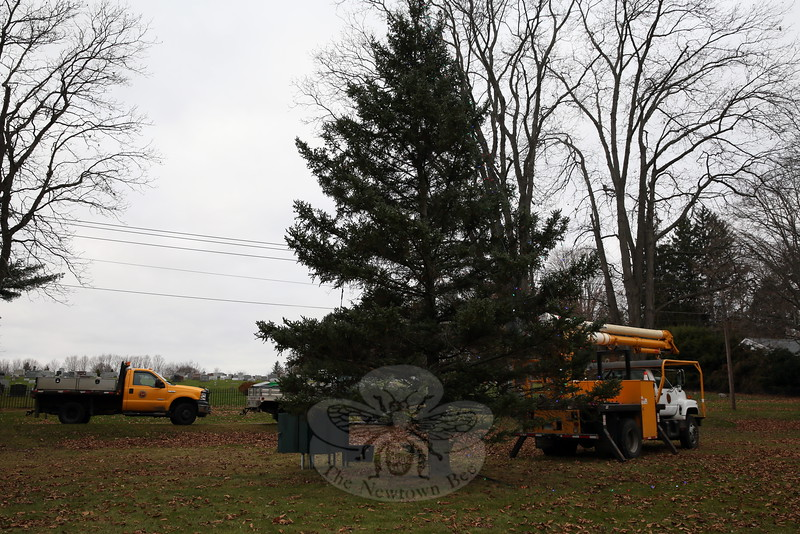 Members of the Parks and Recreation Department worked on Wednesday, November 18, to prepare the tree at the Ram Pasture for the Annual Tree Lighting Ceremony, Friday, December 4. Activities will begin at 6:30 that evening, and the tree will be lit at 7. By midmorning on November 18, workers were taking a break, but some lights were already shining out from most branches. (Hallabeck photo)