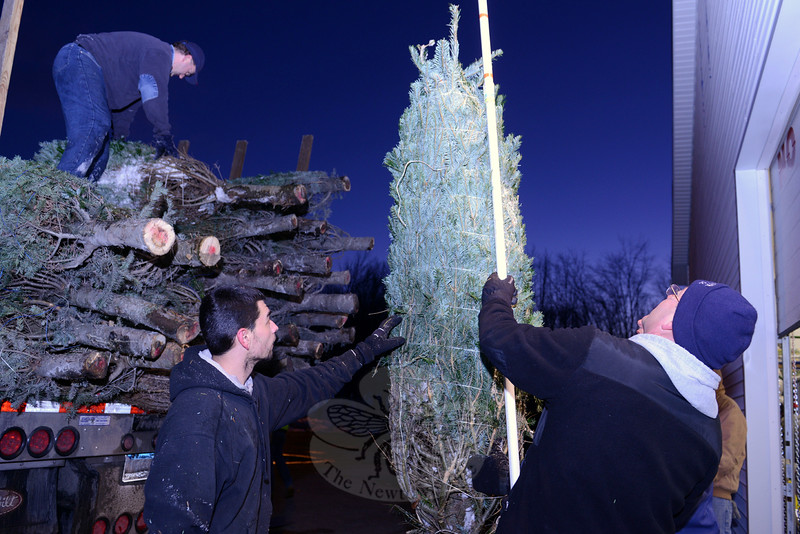 Firefighters Tom Bernath, left, and Scott Allen check a tree as it is unloaded at the Sandy Hook Volunteer Fire & Rescue main station at sunset on Friday, November 28. As they come off the truck, trees are measured for height, and then stacked so that all similar sizes and types are grouped together. Up on the truck, at left, is Sandy Hook Lieutenant Kevin Stoyak, preparing to drop another tree down for processing. (Bobowick photo)