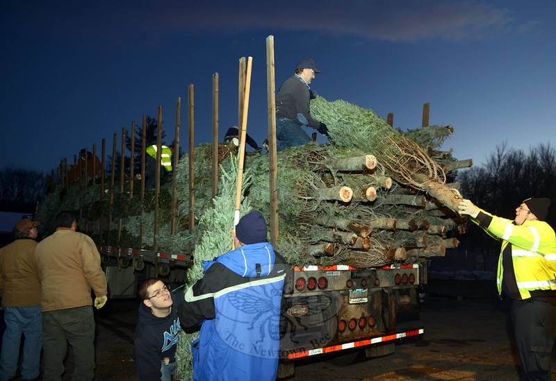 Once the Christmas trees arrived in Sandy Hook late Friday afternoon, they were unloaded by company members, organized by height and type, and ready for sale. The fire company's annual fundraiser began at 6 pm Friday and will continue daily until Christmas Eve or while supplies last. (Bobowick photo)
