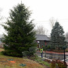Public Works employee Jeff Thomas on Wednesday, December 3, strung green and white LED lights in a Norway spruce at 2 Riverside Road. The tree stands across the street from The Glen, 2 Washington Avenue, where Sandy Hook's traditional holiday evergreen has been decorated with lights annually. Prior plans to cut down The Glen tree last year saw the new spruce incorporated into the ongoing streetscape project that brought improvements to the center. Both trees will again cast a festive glow across Sandy Hook Center this holiday season. (Bobowick photo)
