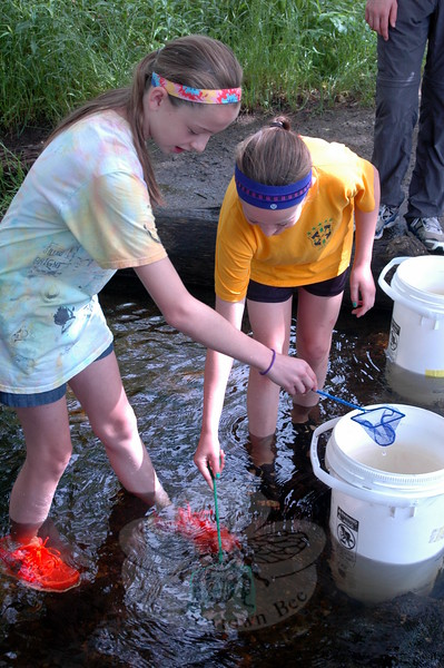 Fraser Woods Montessori School students Ella Olcese, left, and Meryl McKenna worked to release trout on Friday, June 19, that had been raised in a tank in a classroom at the school since October. Other students and math teacher Zach Brown also released trout. (Hallabeck photo)