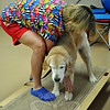 Ms Henderson helps Grace on the balance board, an exercise that encourages the dog to bear weight on the affected leg. Her human patients also utilize a similar piece of equipment, says Ms Henderson. (Crevier photo)