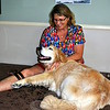 Gail Henderson of Paws and Paddles in New Milford, a certified canine physical therapist, starts each canine session with a massage. Grace, owned by Newtown resident Sherry Paisley, enjoys her massage. Not all veterinarians or dog owners are aware of the benefits of physical therapy for pets, says Ms Paisley, but it is the only treatment that has been successful in getting Grace walking after a mysterious leg affliction. (Crevier photo)