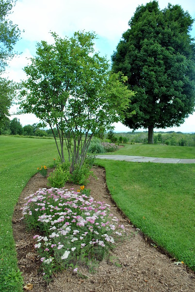 A serviceberry tree at one end of this garden looks over plantings that include orange butterfly milkweed and yarrow. (Crevier photo)