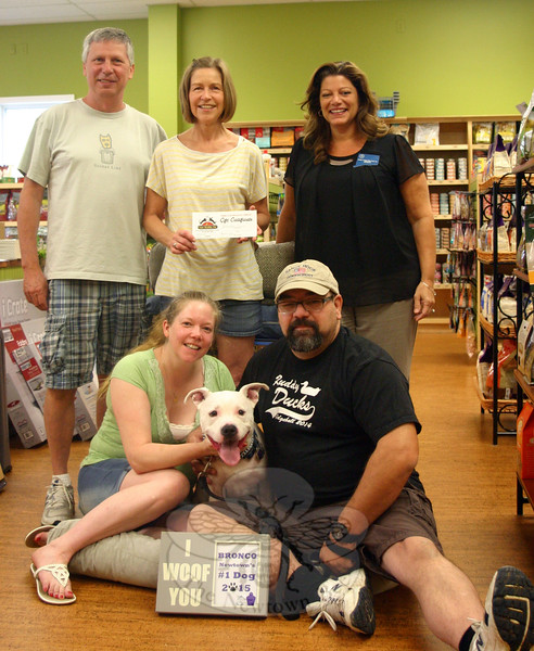 "Bronco, a 4-year-old pitbull, was joined by owners Trina and Chris Cain in one of the comfortable dog beds at Your Healthy Pet on July 21. That morning, the Cains were met by Town Clerk Debbie Aurelia Halstead, standing at right, who formally presented Bronco and his ""parents"" with the Newtown #1 dog tag, an honor presented to one lucky dog each year after the June 30 deadline to obtain or renew dog licenses by town residents. The group gathered at the new location of Your Healthy Pet, at 61 Church Hill Road. There they were greeted by Tom and Mary-Kay Novak, standing left and center, who co-own the business with their son Ryan. The Novaks presented the Cains with a $50 Your Healthy Pet gift certificate. (Hicks photo)"