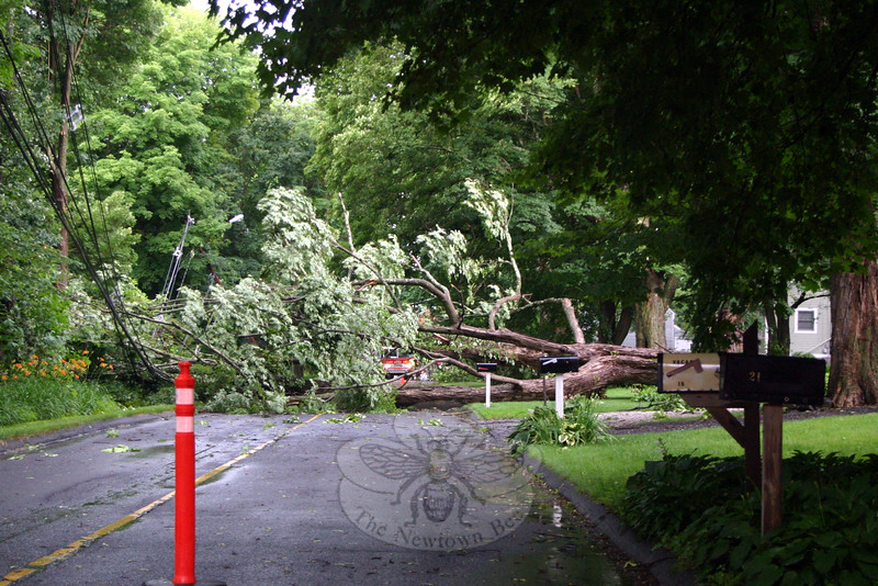 A Hook & Ladder fire truck can just be seen between the branches of a large tree that fell during the height of Wednesday's storm on The Boulevard. The tree blocked the roadway and pulled all power, communication, and other utility lines with it. The roadway was closed, as was the southern end of Budd Drive, which was also blocked by the tree and wires. (Hicks photo)