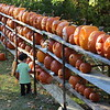 One young visitor to the Page residence spent time checking out the pumpkins on the lower levels of the display. Jake Ragan and family dropped off a few pumpkins for this year's display on Friday. (Hicks photo)