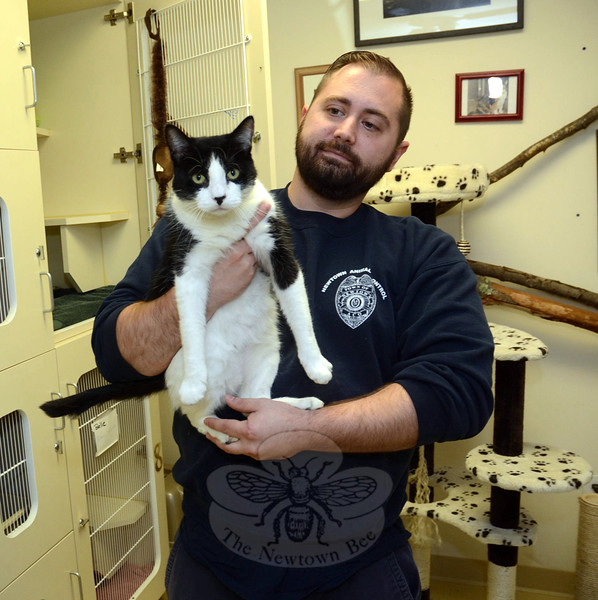 Matt Schaub, an assistant animal control officer, holds Fritz, a neutered male cat who lives at the town animal shelter at Fairfield Hills. Fritz was found roaming several weeks ago in the Glen Road area. (Gorosko photo)