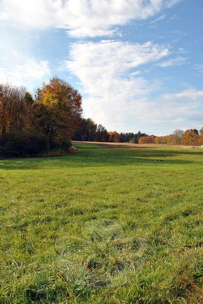 A community garden could spring from the overgrown plot of goldenrod, seen at the far end of this meadow in this photograph, is one vision for the animal sanctuary planned for the property.	(Crevier photo)