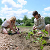 Parks and Recreation Director Amy Mangold, left, works with Barbara Toomey of Transition Newtown to get their peppers, tomatoes, and cabbage planted.   (Bobowick photo)