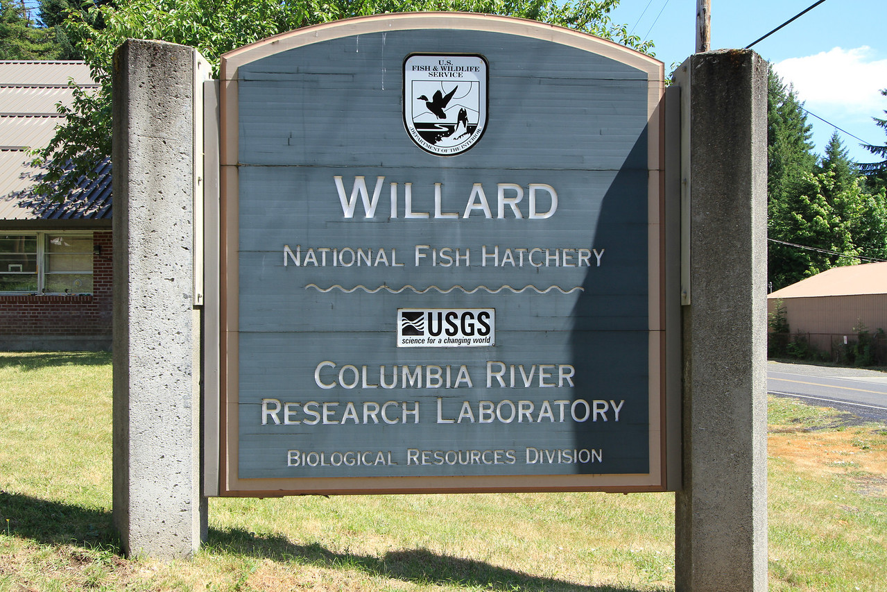 Restoration of the fish habitat on the Columbia River is an ongoing project.