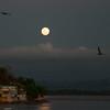 pelican_moon-5