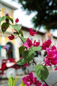 Flowers around the Square in Granada.