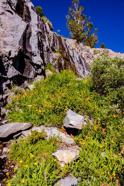 Wild Garden along Glacier Trail
