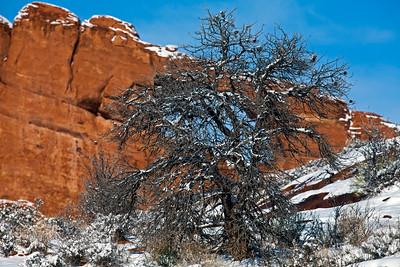 Tree & Arch_9588
