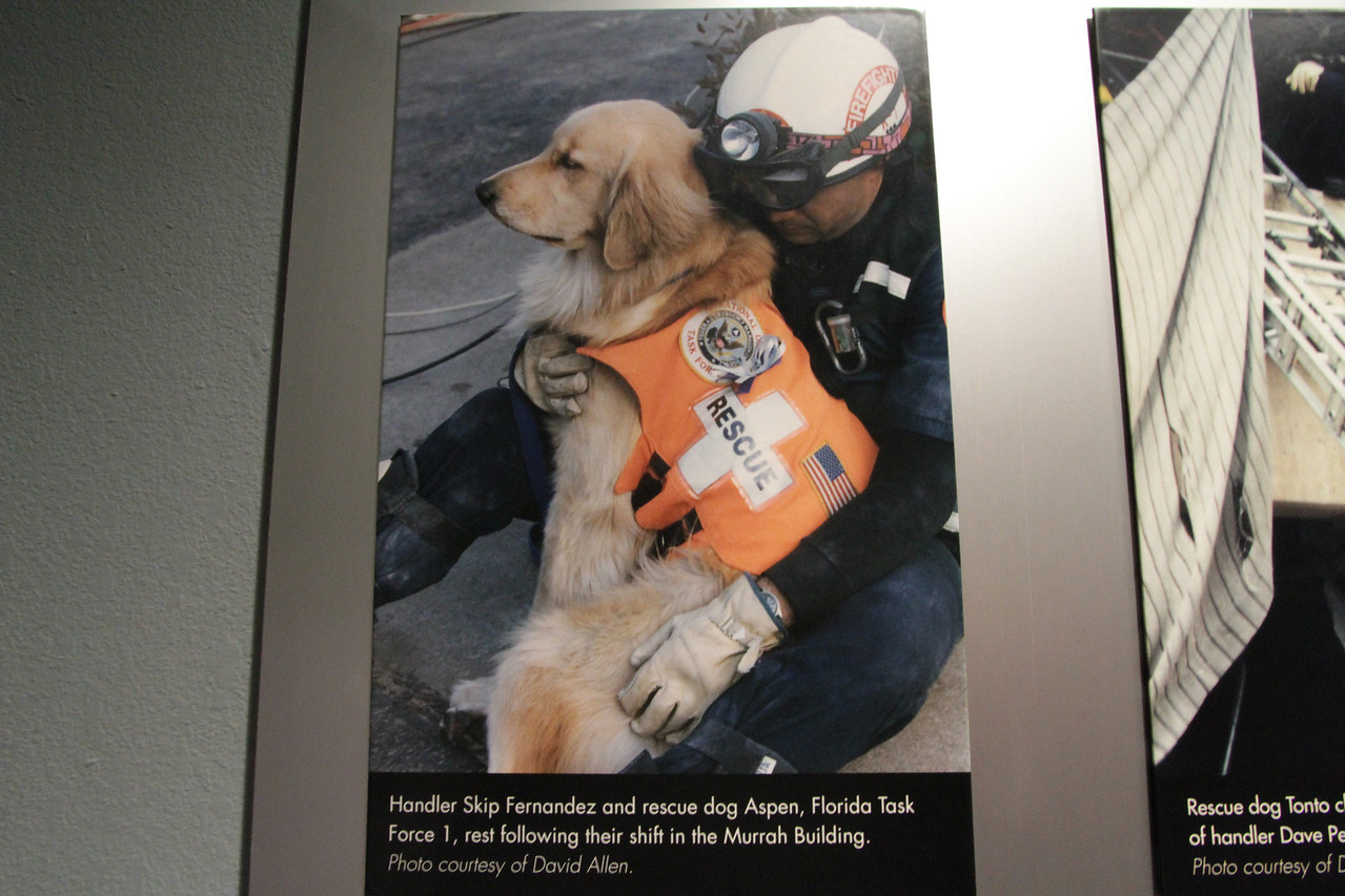 Interestingly, handler Skip Fernandez was a bank customer of Lynda's in Miami.  He was with the Miami-Dade Fire Departments Search & Rescue Unit and responded to aid in the search for survivors.