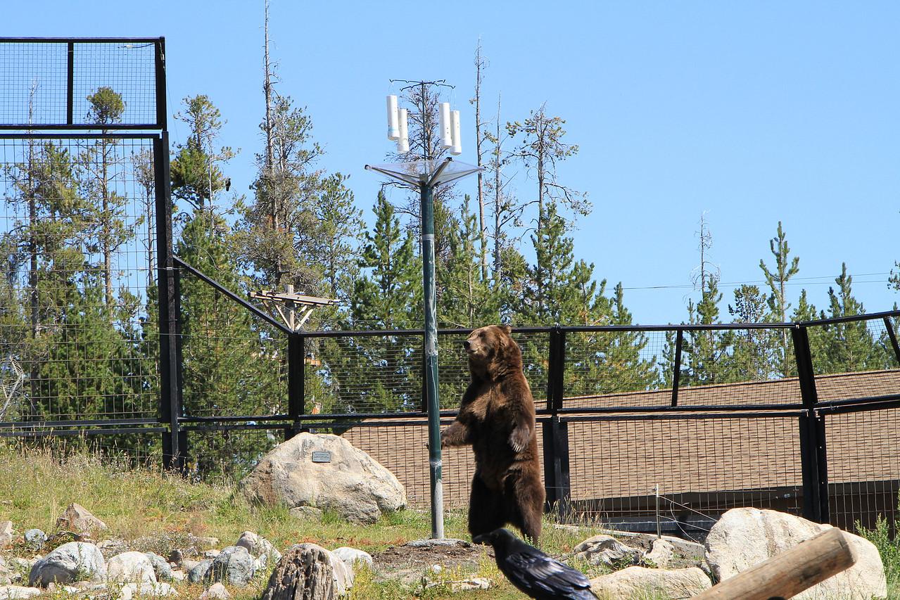 This simulates bear proof bird feeders.