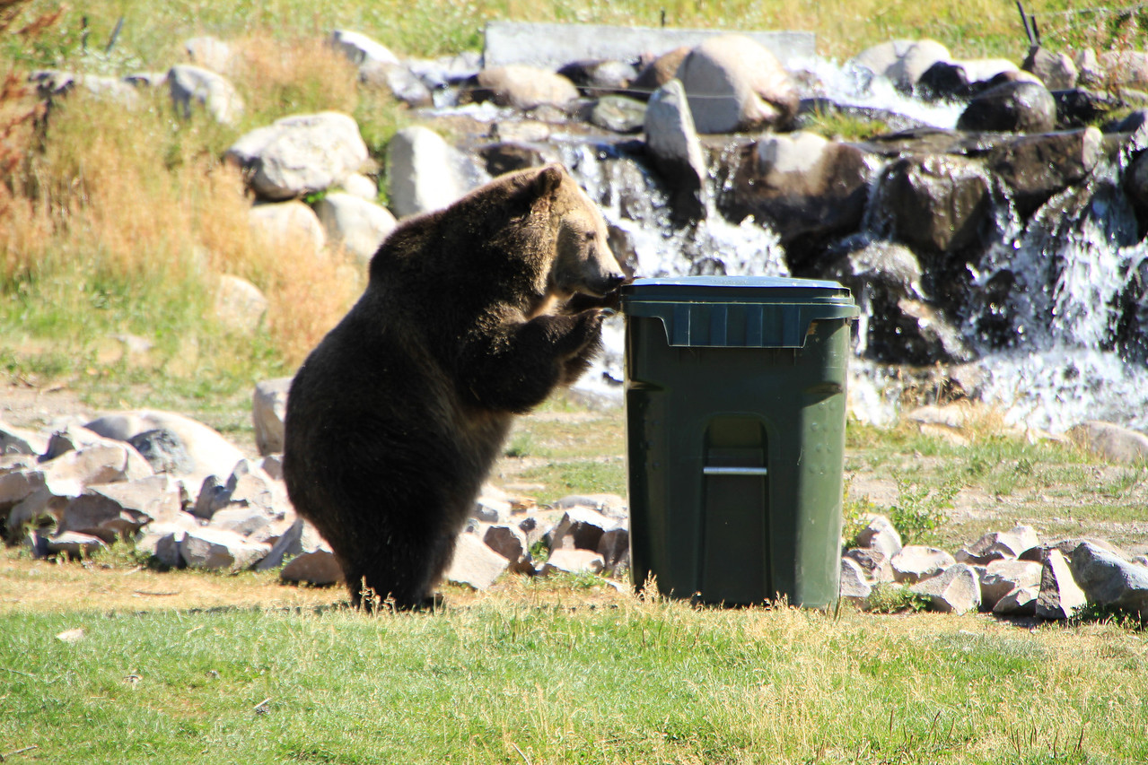 Hmmmm, garbage can, must be food.  Now can I get in it????