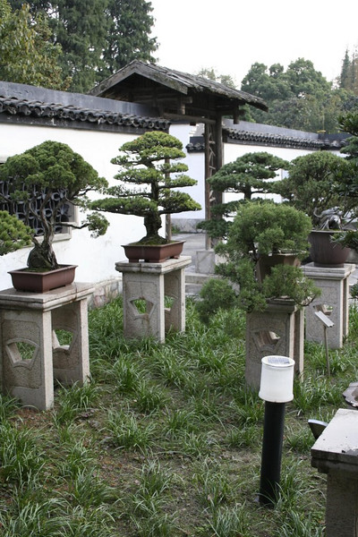 Shanghai Botanical Garden - Nov 10, 2007