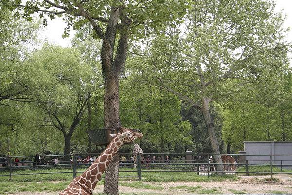 shanghai_zoo-112