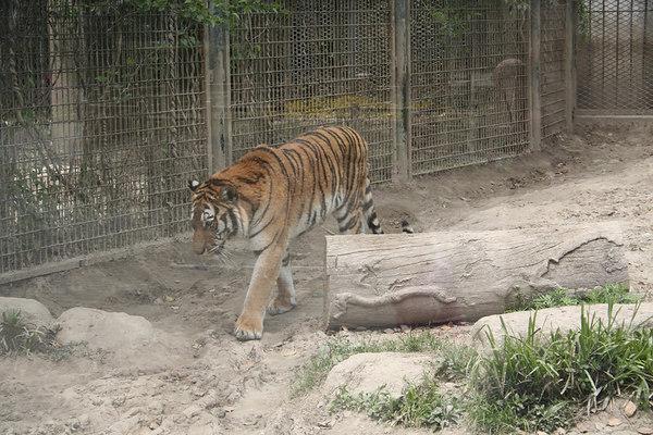 shanghai_zoo-026