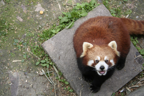 shanghai_zoo-034