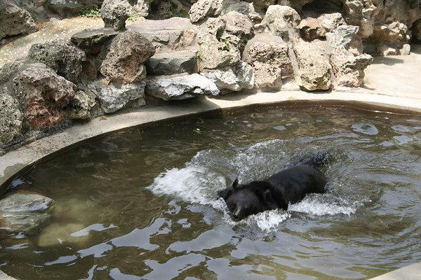 shanghai_zoo-070