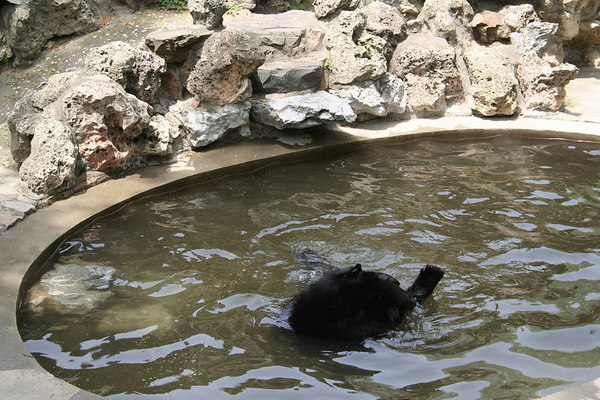 shanghai_zoo-079