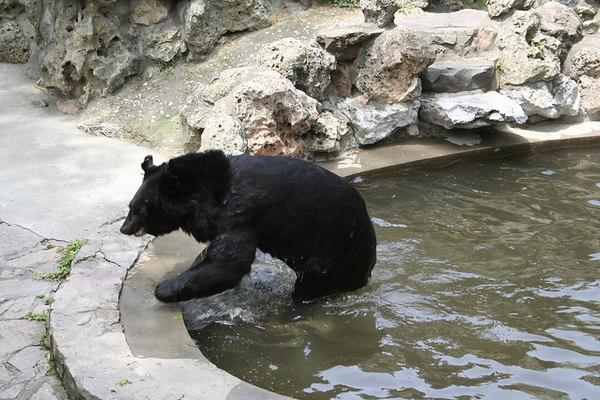 shanghai_zoo-084