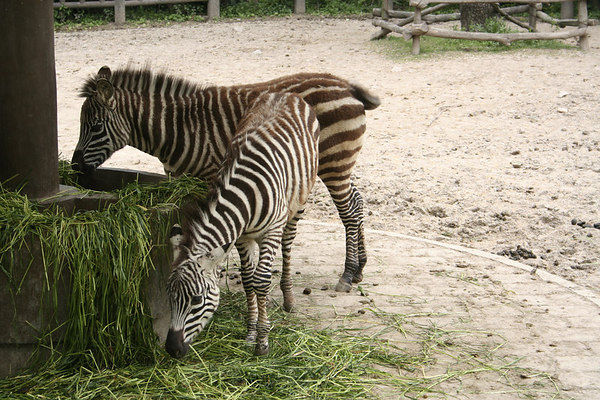 shanghai_zoo-109