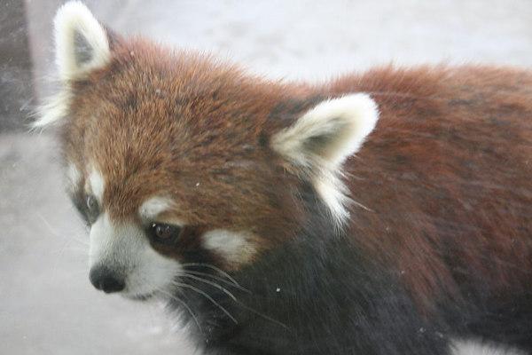 shanghai_zoo-043