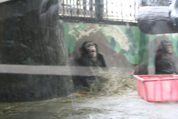 shanghai_zoo-177