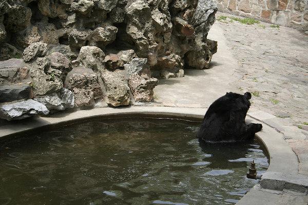 shanghai_zoo-063
