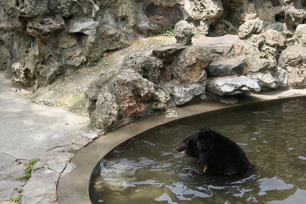 shanghai_zoo-074