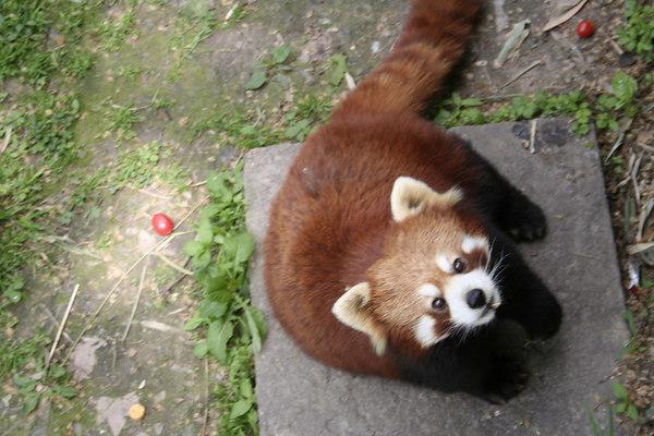 shanghai_zoo-040