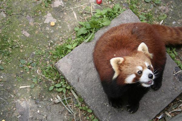 shanghai_zoo-035