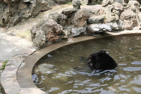 shanghai_zoo-077