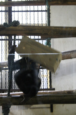 shanghai_zoo-172