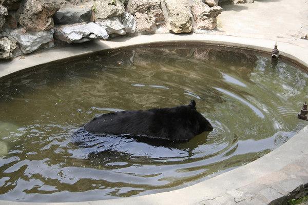 shanghai_zoo-061