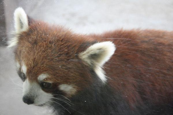 shanghai_zoo-044