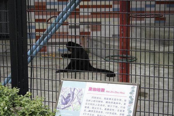 shanghai_zoo-188