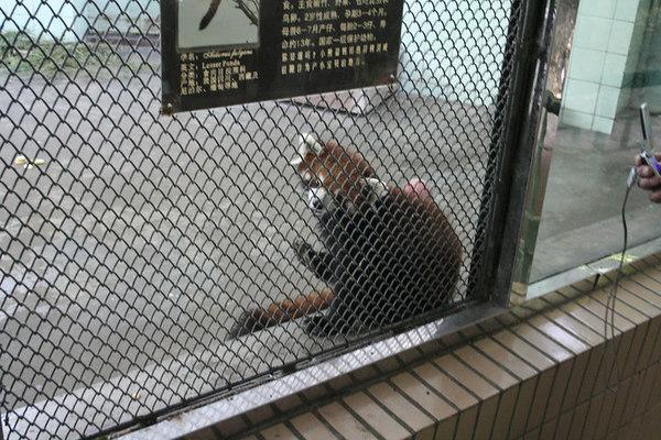 shanghai_zoo-045