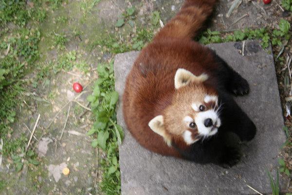 shanghai_zoo-039