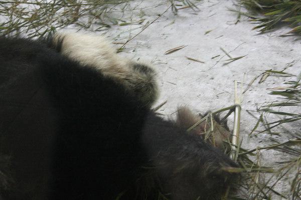 shanghai_zoo-048