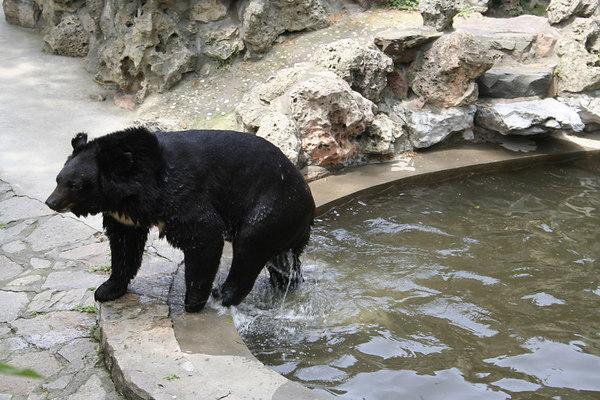 shanghai_zoo-086