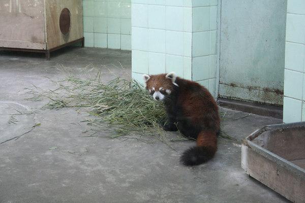 shanghai_zoo-047