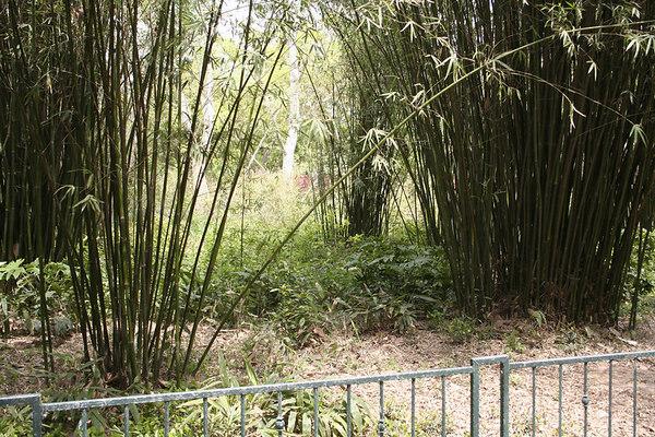 shanghai_zoo-095