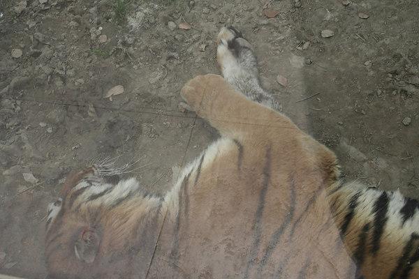 shanghai_zoo-027